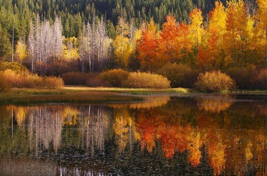 Symmetry of the Season by Great-Basin-Wilds