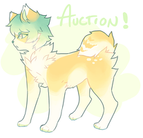 DESIGN AUCTION by pokituu