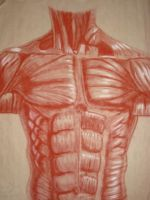 Body muscle structure by MiketheMike
