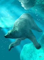 Polar Bear Underwater by deskridge