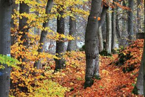 Herbstwald by Cr4c1dud3
