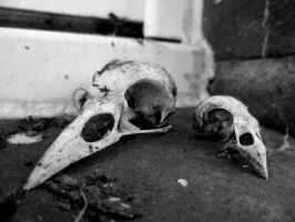 Bird Skulls by RevanREK