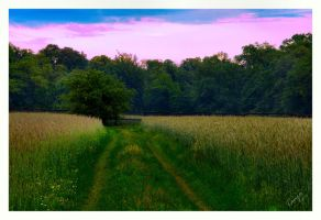 The Path by Tanja0869