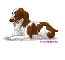 FP comm. 2 - Welsh Springer by shelzie