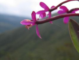 Volcanic Orchids by Chestbearman