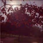 longing is out of focus v2 by unevens