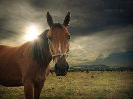 Lovely nose by EdSinger