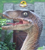 Velociraptor by Blade-of-the-Moon