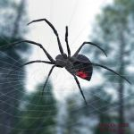 BLACK WIDOW SPIDER by LlolaLane