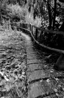 Path Of Riddles by Forestina-Fotos