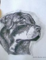 Rottweiller by chaser1964