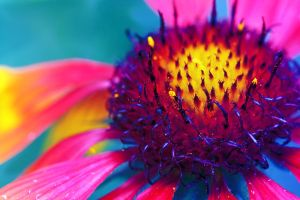 Feuerblume by sumahli