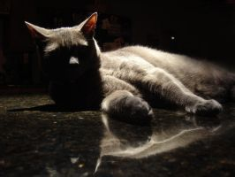 Cat In The Shadows by LDFranklin
