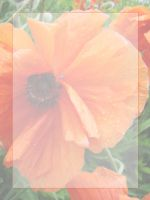 LitTemplates:  Orange Poppy by arkytraveler