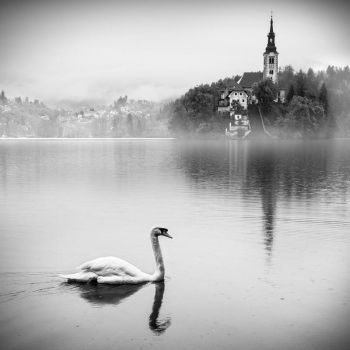 bled X by roblfc1892