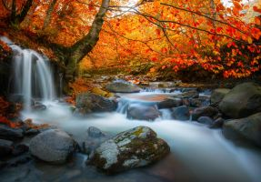 The delicate sound of water by borda