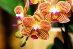Orchids by dmguthery