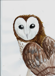 Watercolor barn owl by NightFury1020