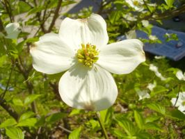 Dogwood, White by TheSortedBead