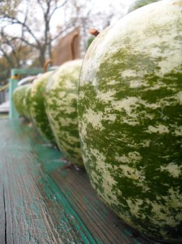 Gourds by CRUG