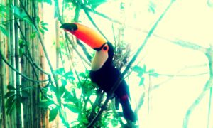 Classic Toucan by Zxz328