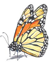 Monarch Butterfly by Rollingboxes