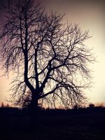 tree by zanimpojde