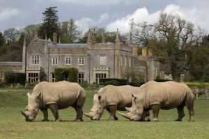 White Rhinos by paulblythe