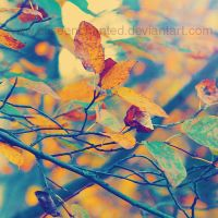 Beginning of autumn by EliseEnchanted