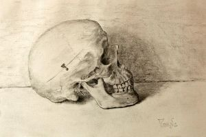 Still life skull by MesolimbicArt