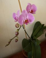 My own orchids 5 by steppelandstock