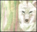 Wolf Watercolour by Sabtastic