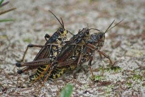 Grasshopper Threesome by Category6