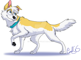 Border collie dourada c: by CarolGS
