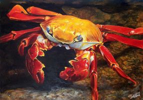 Sally Lightfoot Crab Acrylic Painting by stevegoad