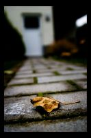 the lonely leaf by darkrush