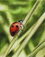 Ladybird by youngmoons