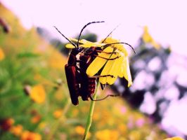 Insects Love by zikex