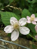 Bramble Flower by Embrace-The-Night