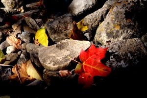 Red and Rock by greenwalled1
