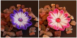 Double-colored petals by Arleen