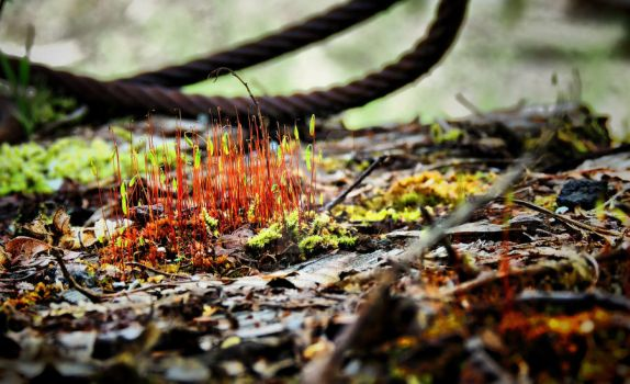 Rusted Grass by SaraRalston