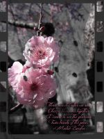 Cherry Blossom Film by cynfullpryde