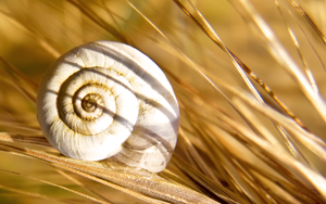 Snail-shell by Bhesi