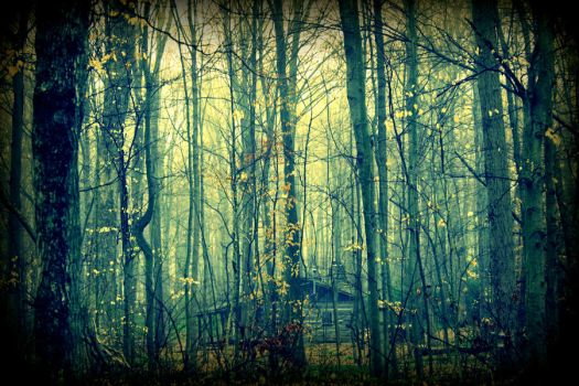 Deep In The Woods by jmarie1210