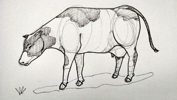 Cow by jaimeiniesta