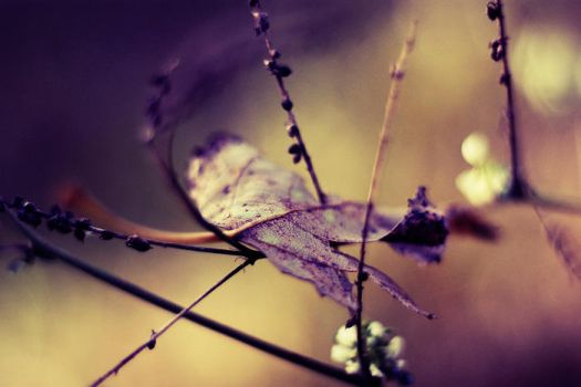 Colours of autumn IV by ladyang