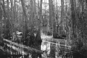 Swamp 2 by viper86
