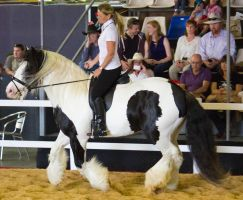 STOCK - 2014 Total Equine Expo-74 by fillyrox