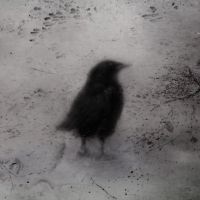 Crow Sight by intao
